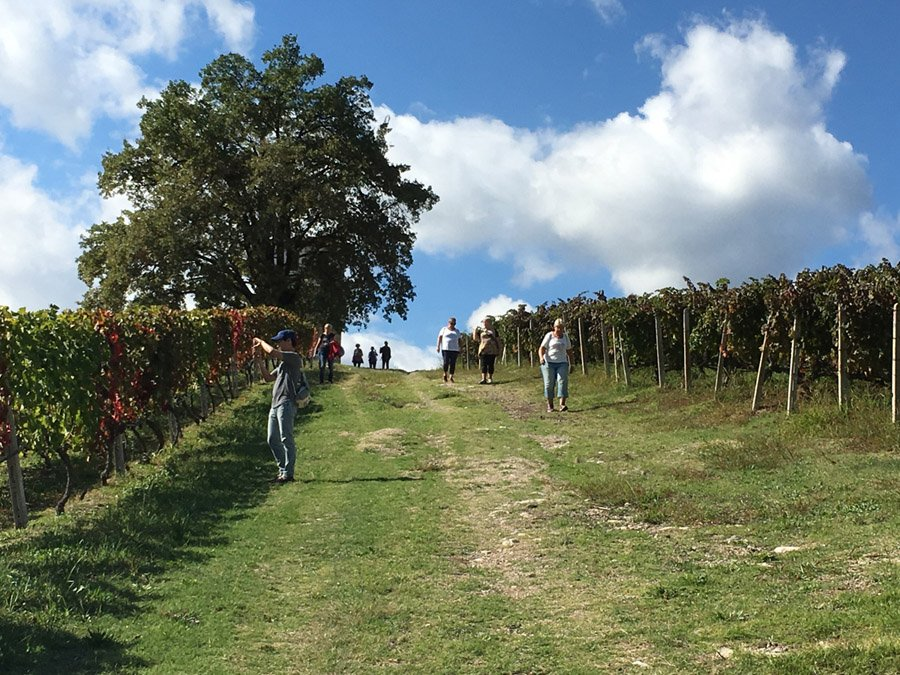 trigiro_hike-wine_tour-0923