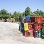 trigiro-unique-travel-greece_box-grapes