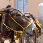 trigiro-unique-travel-greece_donkey