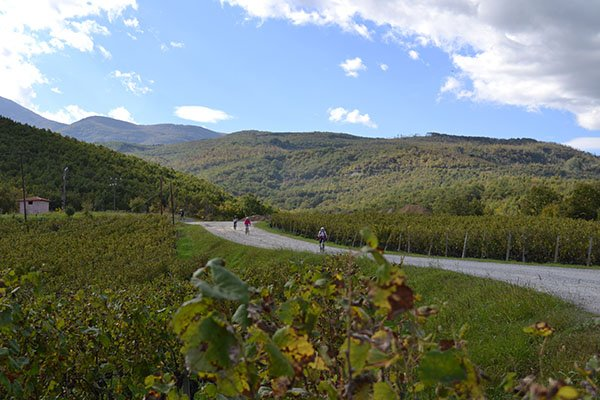 tirigiro - bike and wine tour in Naoussa