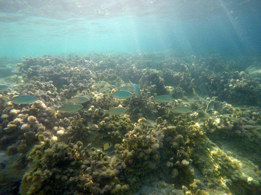 trigiro_halkidiki_tour_amazing_underwater