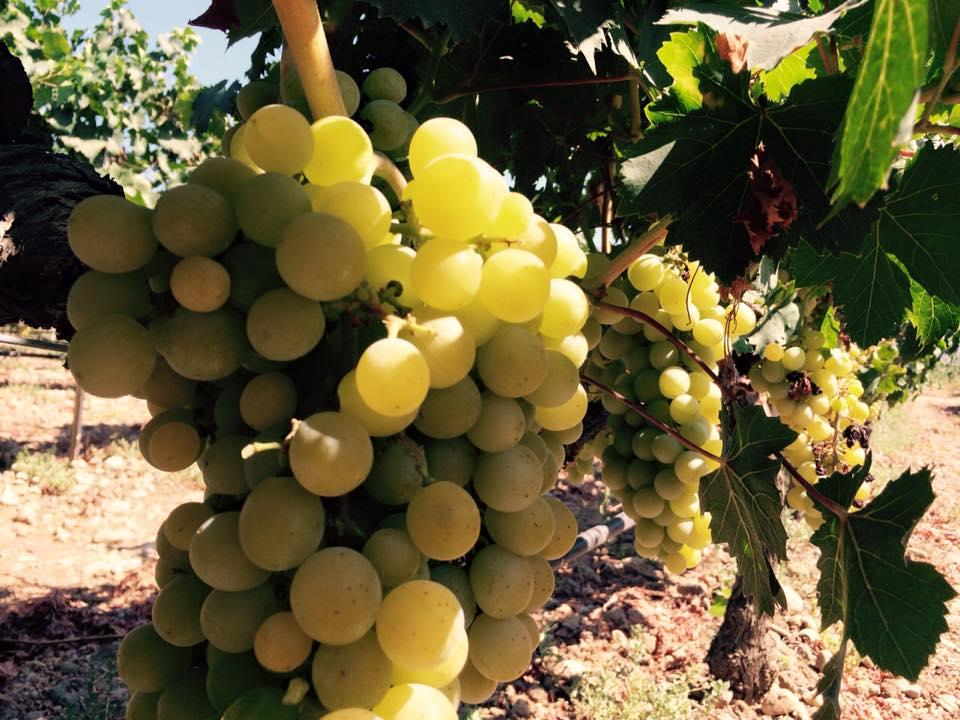 trigiro_tour_trigos_wineseptember_wine