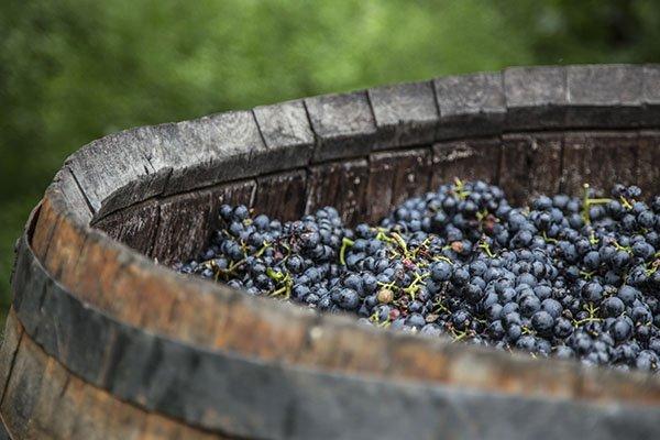 trigiro_tours_greece_wine-food-pairing_red-wine