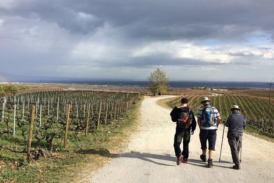 trigiro_tours_reason_visit_naoussa_wine-region_walk-vineyards