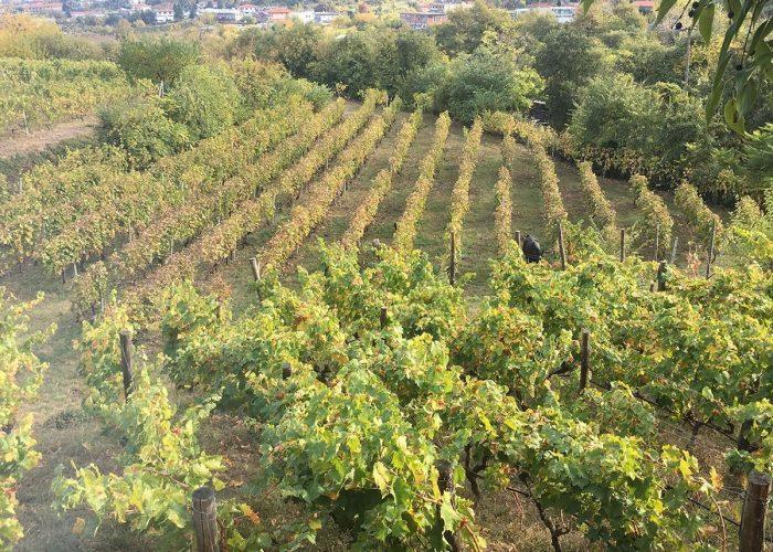 trigiro_travel_tour_naoussa_vineyards_nature