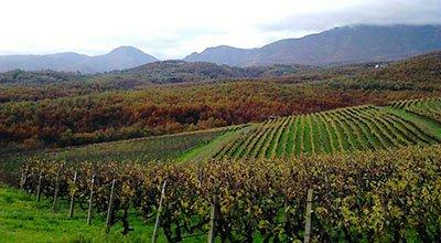 trigiro travel - naoussa the wine city