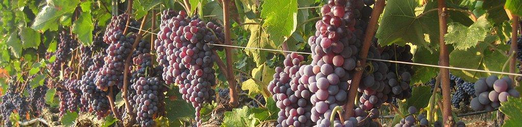 trigiro travel wine xinomavro naoussa