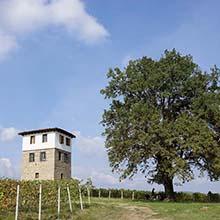 trigiro travel wine xinomavro naoussa kirgianni