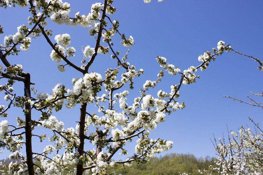 trigiro_unique-travel-experience_Greece-spring_flora
