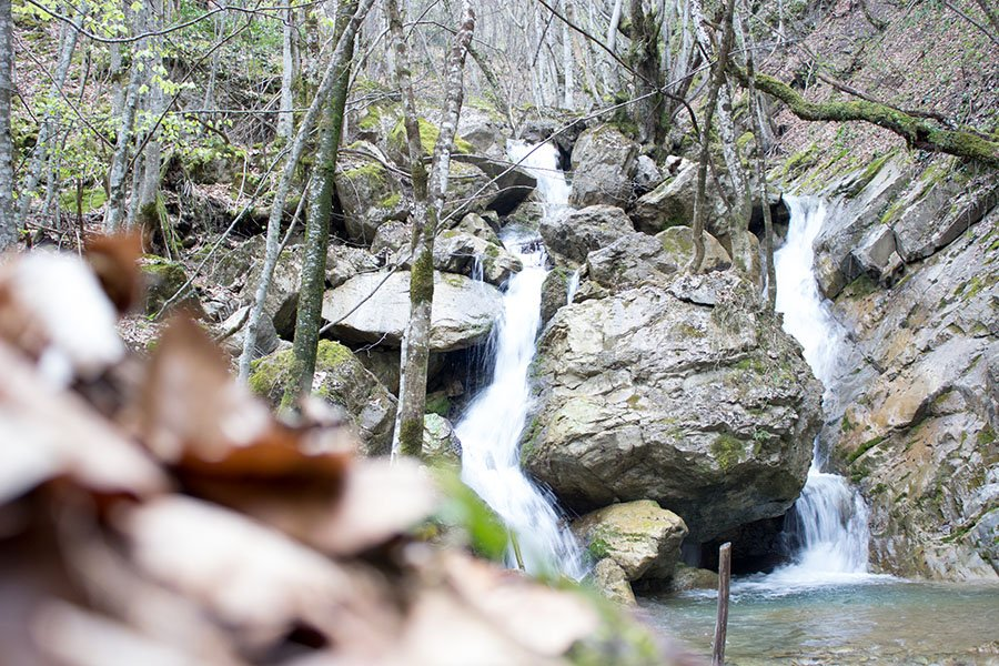 trigiro_unique-travel-experience_Greece-spring_forest