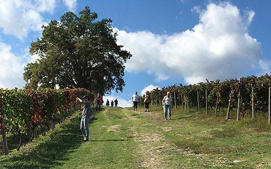 trigiro_unique_travel_experience-naoussa_wine-city-03
