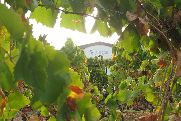 trigiro_wine-tasting-tour-Greece_estate-chrisohoou