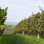 trigiro_wine_roads_north_greece-03
