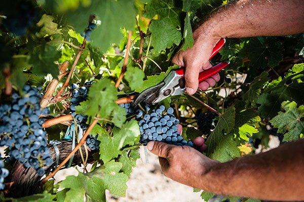 trigiro_wine_tours_greece